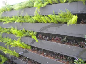 parede-verde10