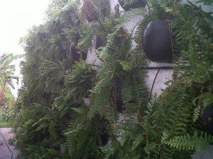 parede-verde31
