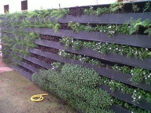parede-verde61